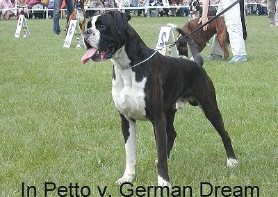 In Petto von German Dream
